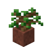 Potted Oak Sapling<br>