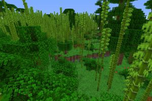 Bambou à profusion
